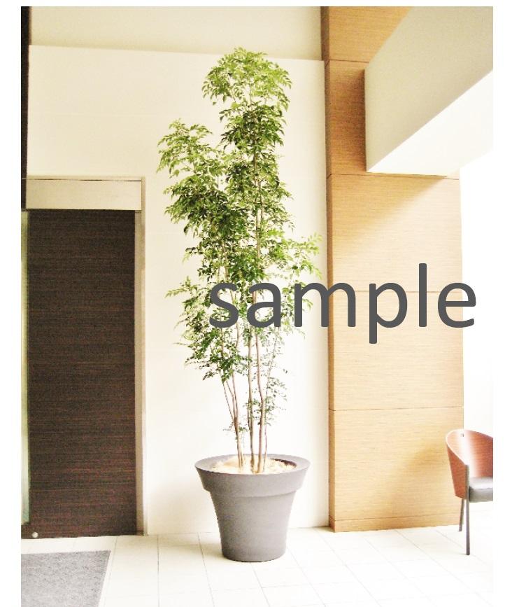 おまかせ観葉植物 Lサイズ G-015