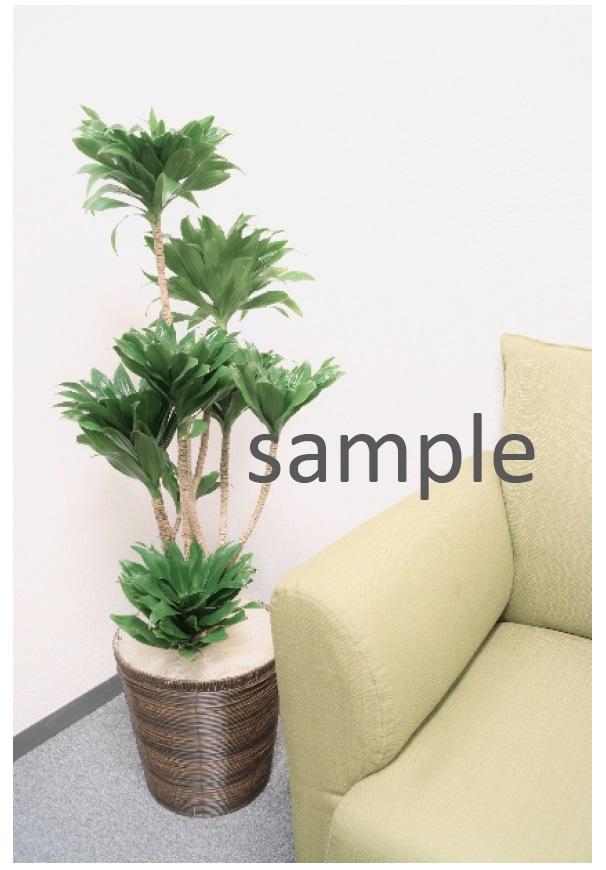 おまかせ観葉植物 Mサイズ バスケット G-012