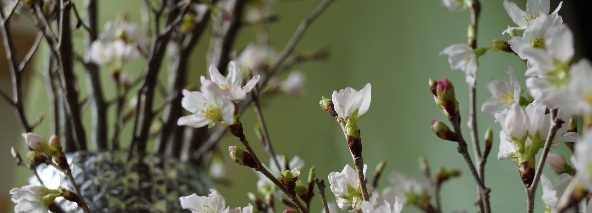 桜を使った活けこみやアレンジメント
